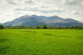 http://Grasslands
